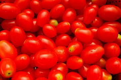 ny tomat Arkivbild