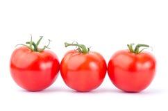 ny tomat Royaltyfri Bild