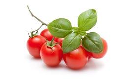 ny tomat för basilika Royaltyfria Foton