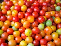 Ny tomat som är till salu på marknaden Arkivbilder