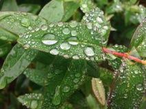 ny trädgård Royaltyfri Foto