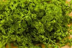 ny trädgårds- parsley Royaltyfri Bild