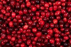 Ny tranbärfruktbakgrund royaltyfri bild