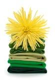 ny tvätterifjäder Royaltyfria Foton