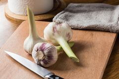 Ny ung vitlök och kniv på köksbordet arkivbilder