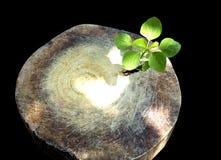 Ny utveckling och förnyande som en affärsidé av att dyka upp ledarskapframgång som ett gammalt träd för snitt ner och en stark pl Royaltyfri Foto
