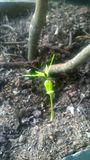 ny växt Arkivfoton
