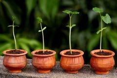 ny växt för evolutionlivstid arkivbild