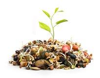 Ny växt från högen av olikt växa för frö royaltyfri foto