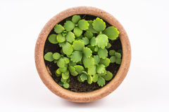 Ny växt i liten orange kruka Arkivfoto