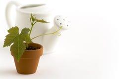Ny växt och watering-can Royaltyfri Fotografi