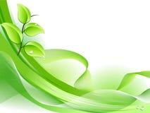 ny växtfjäder för bakgrund Royaltyfri Foto