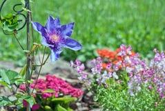 Ny vårträdgård Royaltyfria Bilder