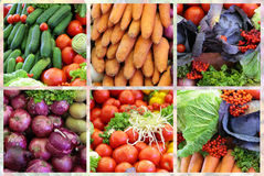 ny variationsgrönsak för collage Fotografering för Bildbyråer