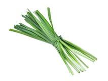 Ny vegetableon för vitlökgräslökar isoalted på vit bakgrund Fotografering för Bildbyråer