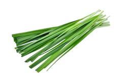 Ny vegetableon för vitlökgräslökar isoalted på vit bakgrund Royaltyfria Foton