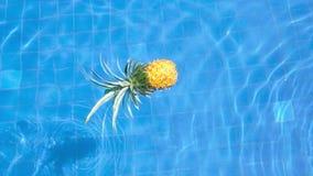 Ny vibrerande ananas i simbassäng Sund livsstil, lopp ultrarapidvideo stock video