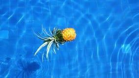 Ny vibrerande ananas i simbassäng Sund livsstil, lopp video arkivfilmer