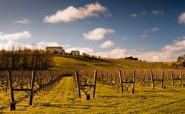 ny vingård zealand Royaltyfria Foton
