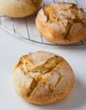 Ny vresig brödbulle Fotografering för Bildbyråer
