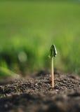 ny växt Arkivbild