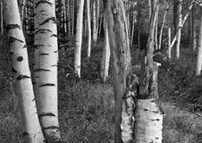 ny white för hösthampshire berg Fotografering för Bildbyråer