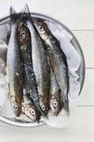 Ny Whitefish Royaltyfri Foto