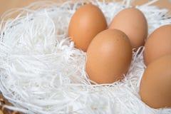 Nya ägg Fotografering för Bildbyråer