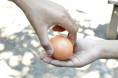 Nya ägg Royaltyfri Bild