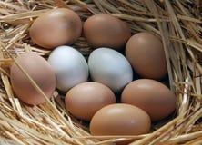 nya ägg royaltyfri foto
