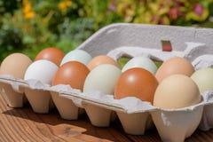 Nya ägg för lantgård i en variation av naturliga jordsignalfärger royaltyfria bilder