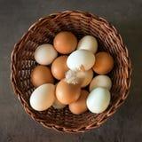 Nya ägg i en vide- korg Begrepp av organiska produkter Lantgård Royaltyfria Bilder