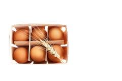 Nya ägg med örat av vete Arkivfoton