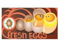 Nya ägg sitter i höna som är klar att meddela Royaltyfria Foton