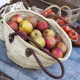 Nya äpplen i korgen Fotografering för Bildbyråer
