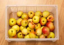 Nya äpplen i plast- behållare Royaltyfri Bild