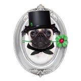 Nya år helgdagsaftonhund Royaltyfri Fotografi