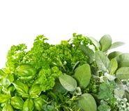 Nya örter över vit bakgrund sunda ingredienser för mat Arkivfoto