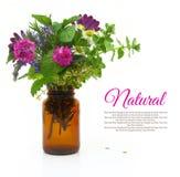 Nya örter och blommor i en medicinsk flaska Royaltyfria Bilder