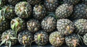 nya ananas Royaltyfri Bild