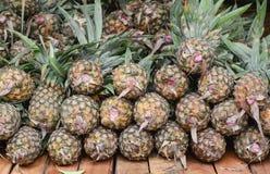 nya ananas Royaltyfria Bilder