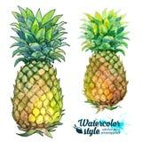 Nya ananors för vattenfärgmålningvektor royaltyfri illustrationer