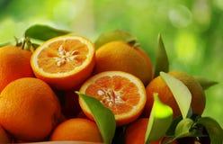 nya apelsiner Royaltyfria Bilder