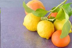 Nya apelsiner, citroner och mandarines på en grå färg gör sammandrag bakgrund Medelhavs- livsstil sund mat Arkivfoto