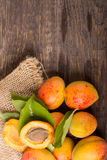 Nya aprikors med bladet Royaltyfri Foto