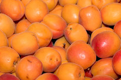 Nya aprikors på försäljning på marknaden Arkivfoto