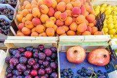 Nya aprikors, plommoner, druvor, äpplen, körsbär och granatäpplen Arkivbilder