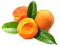 nya aprikosar Fotografering för Bildbyråer