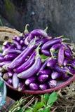 Nya aubergines Royaltyfri Bild