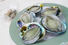 Nya Australien Abalones Royaltyfri Foto